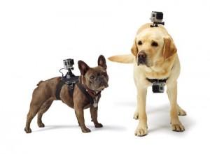 GoPro camera mount, pet's-eye view