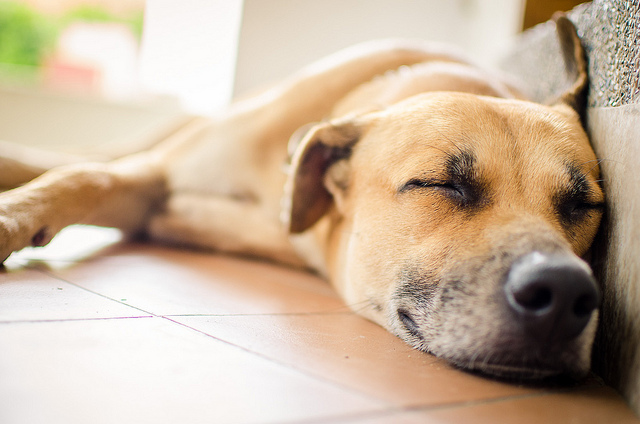 How To Help a New Dog Feel at Home