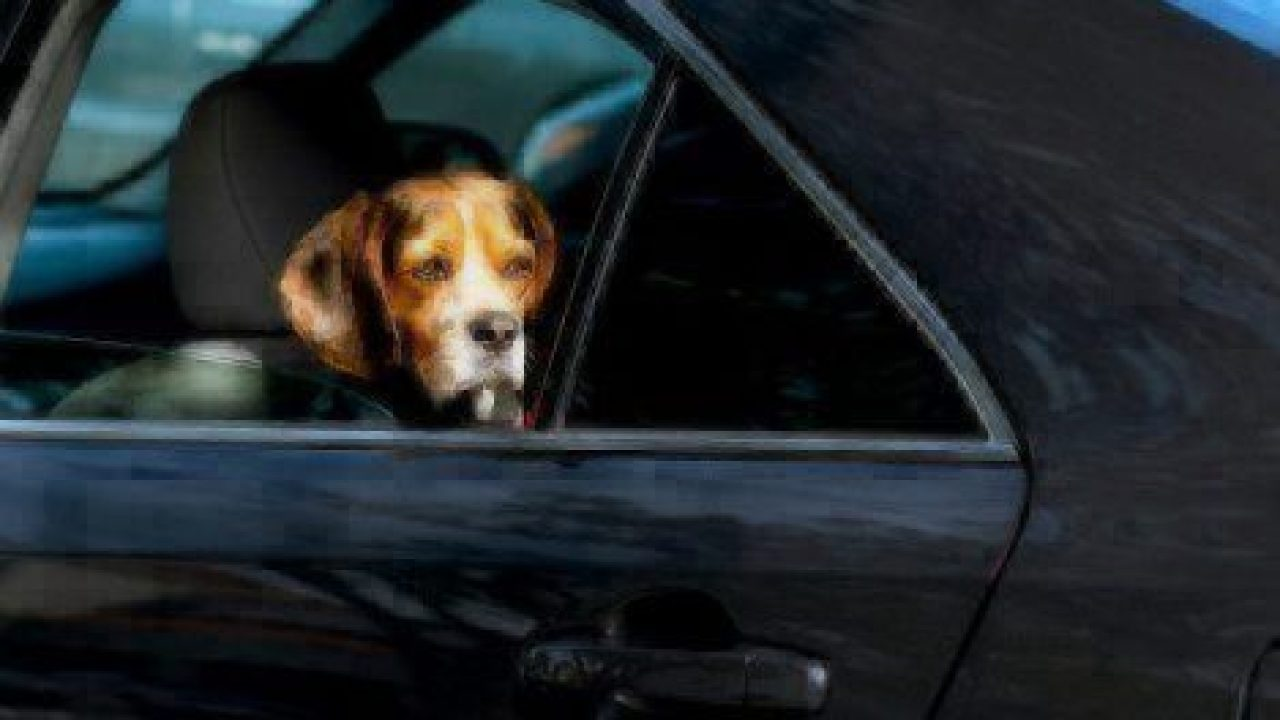 Plan A Road Trip >> 8 Gadgets For a Dog Friendly Road Trip | Healthy Paws Pet