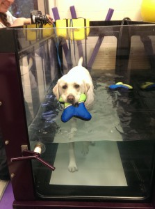 Torn ACL In Dogs-Water Therapy