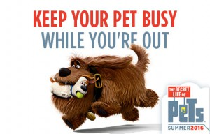Keep-Your-Pet-Busy-While-You-are-Out