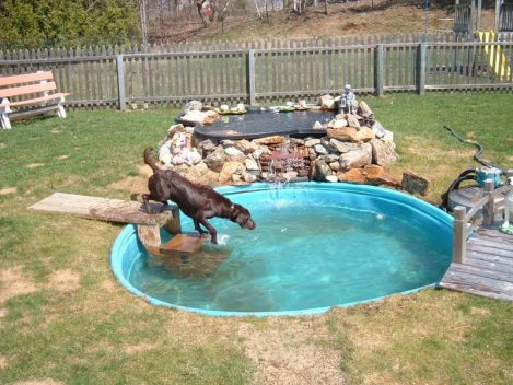 dogs playing in pool