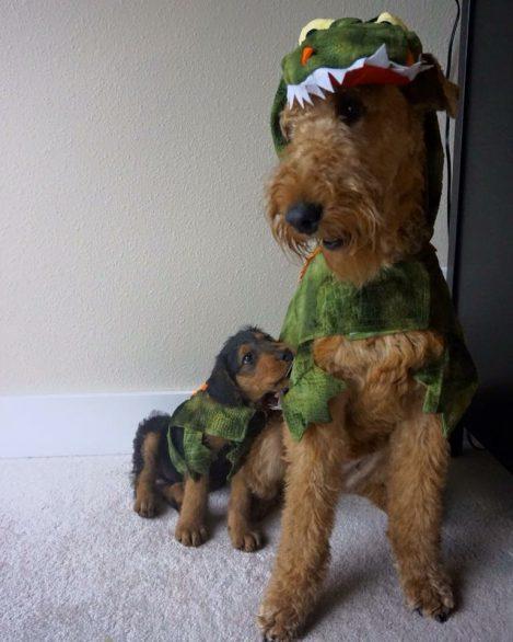 healthy paws halloween crocodile. u201c & Halloween Pet Costume Ideas   Healthy Paws