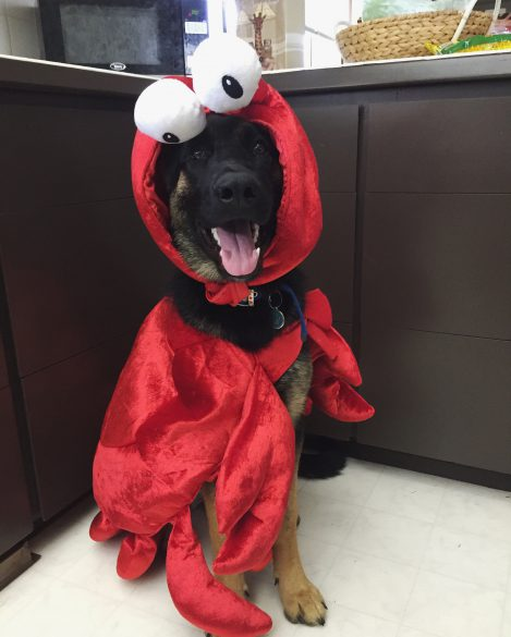 halloween crab healthy paws