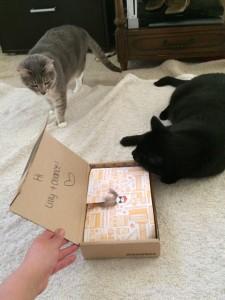 MeowBox-Review