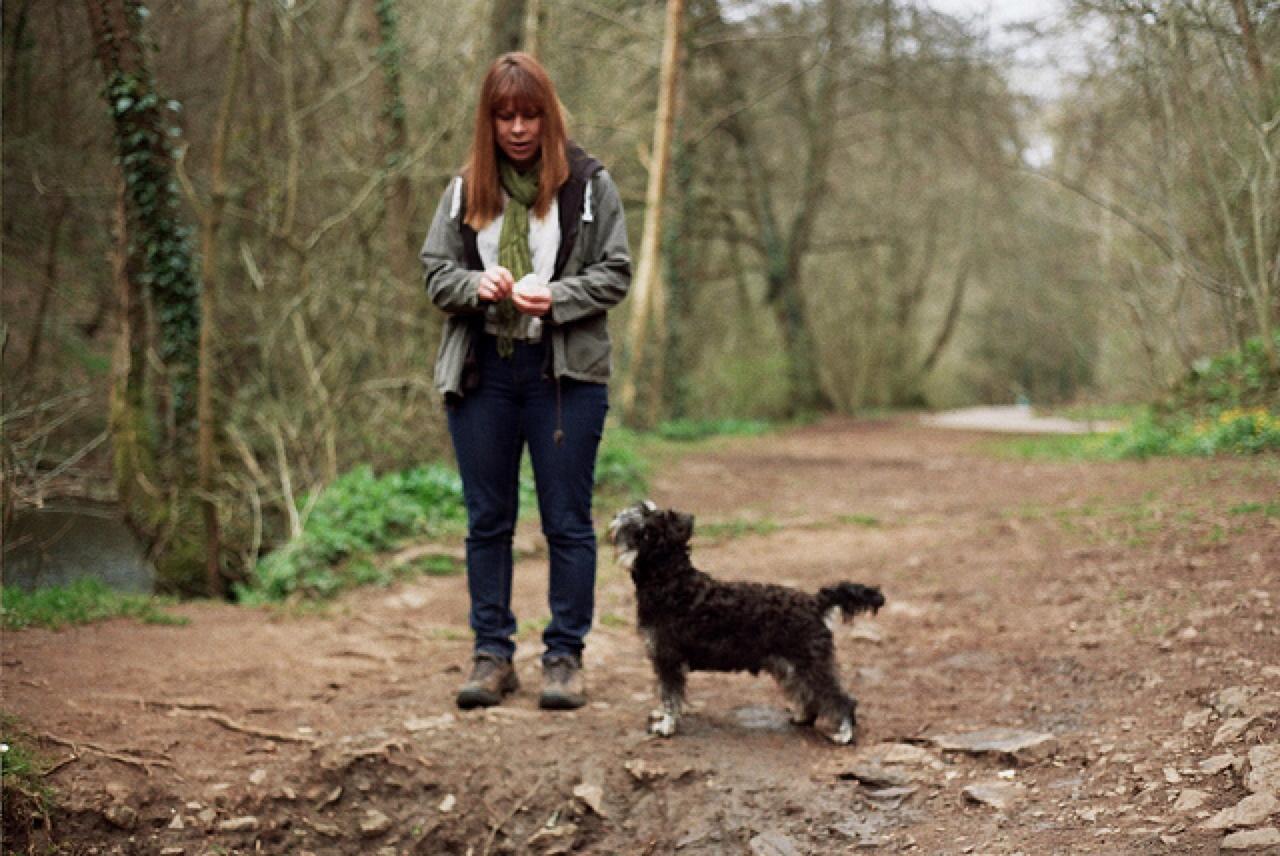 Miniature Schnauzer, Big Personality : Healthy Paws Pet Insurance