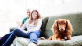 dog-friendly-apartment-renting