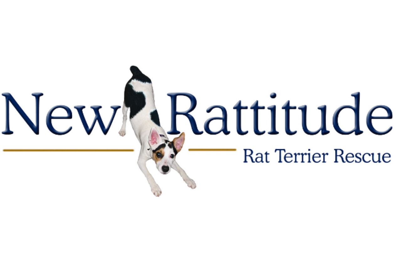 healthy paws pet insurance   rated best in 2015