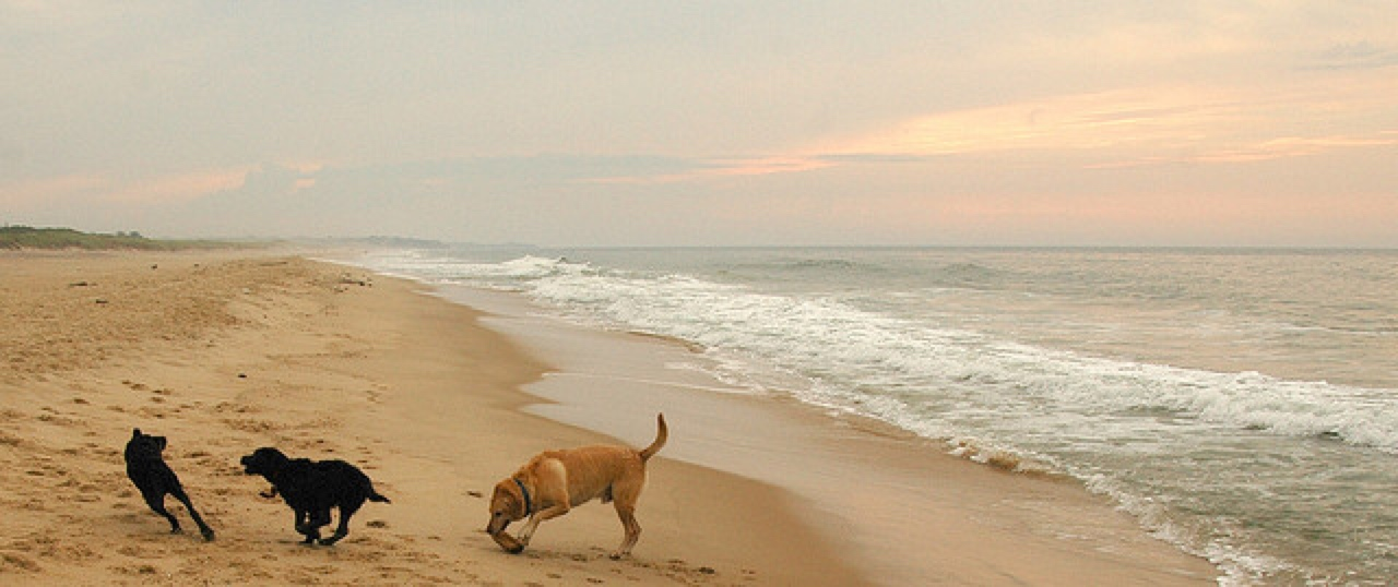 pet friendly beaches