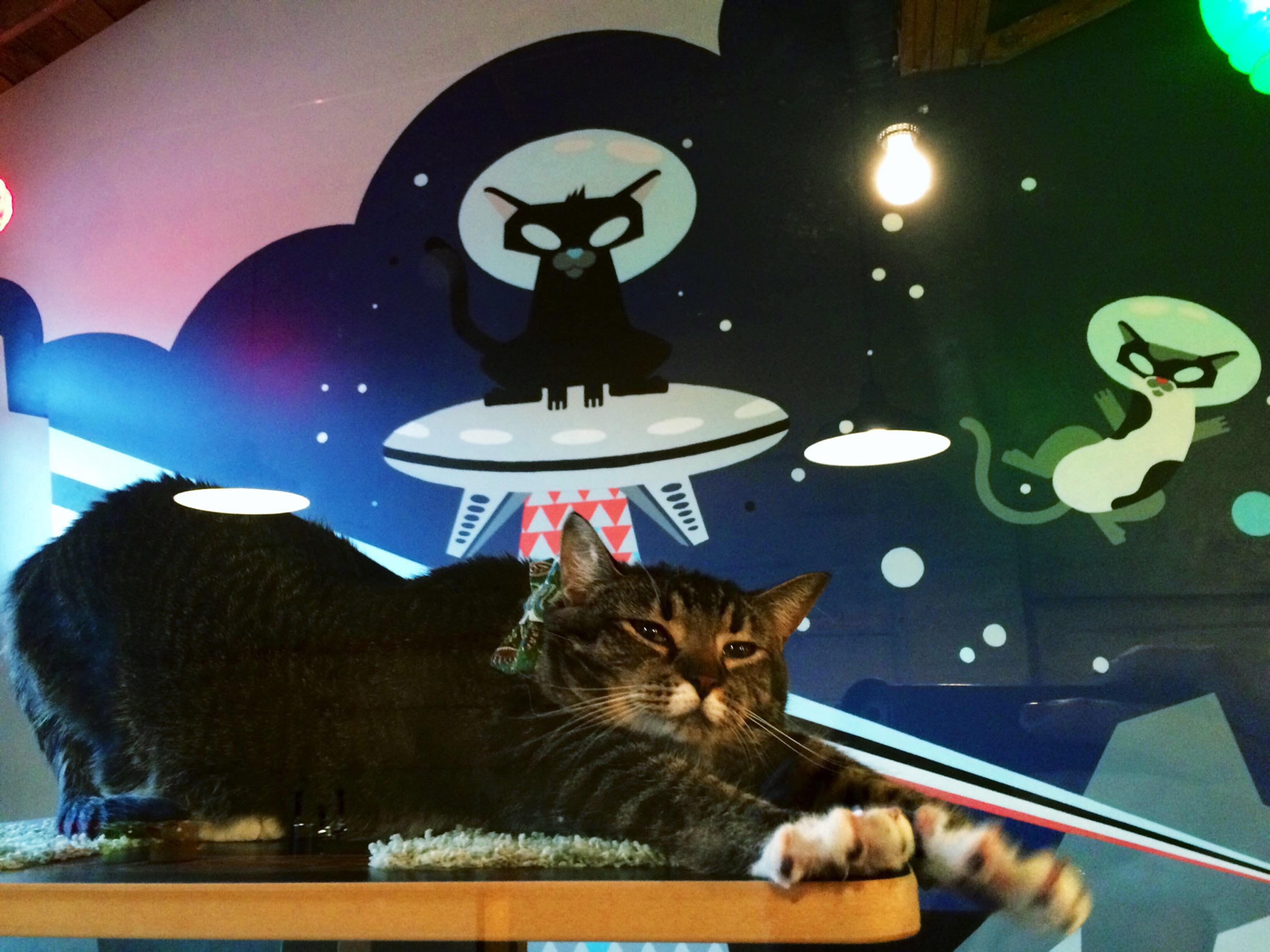Portland cat cafe
