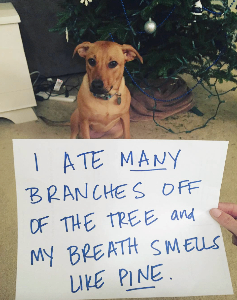 Christmas dog shaming