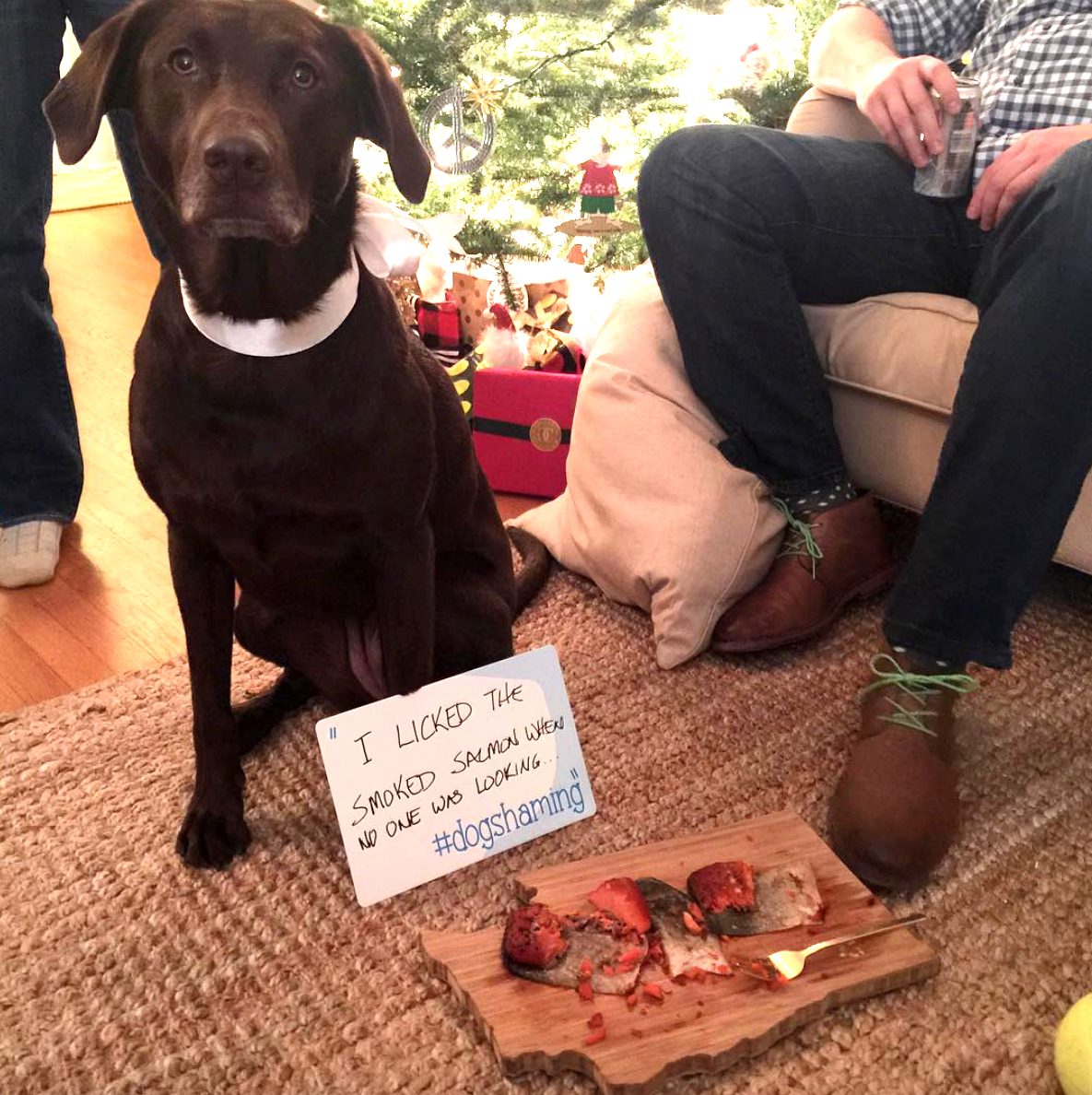 dog shaming Christmas