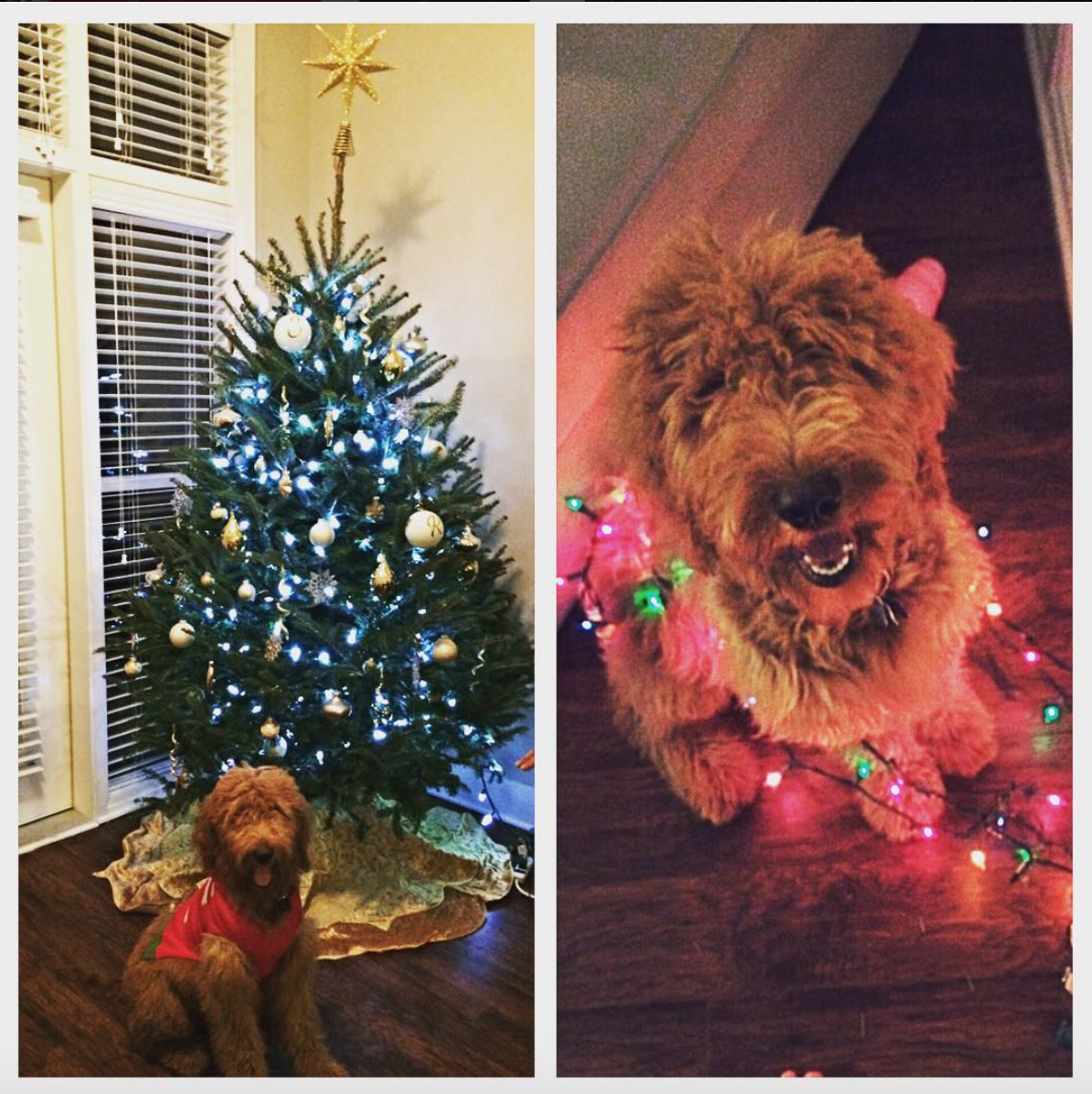 dog Christmas fails