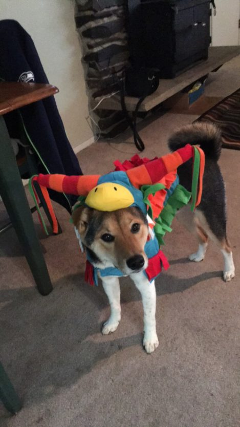dog pinata costume halloween