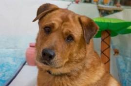 Animal House Rescue Colorado