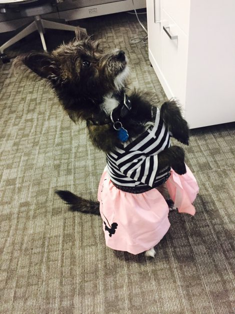 bobby soxer pup halloween