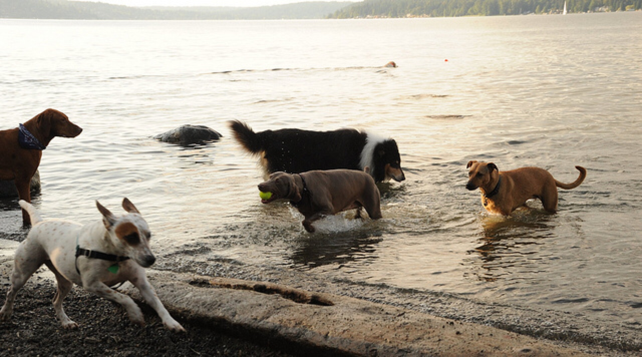 dog friendly beaches Seattle