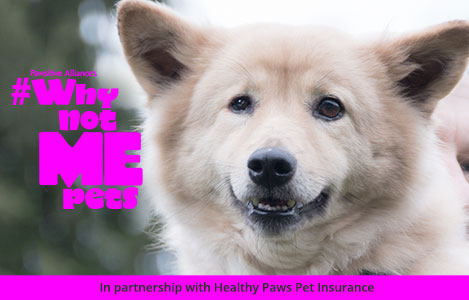 Mar 20, · Healthy Paws pet insurance is our #1 pick for best pet health insurance. Healthy Paws took the gold medal because it has a history of great customer service, annual deductible (vs per incident) and unlimited lifetime benefits/