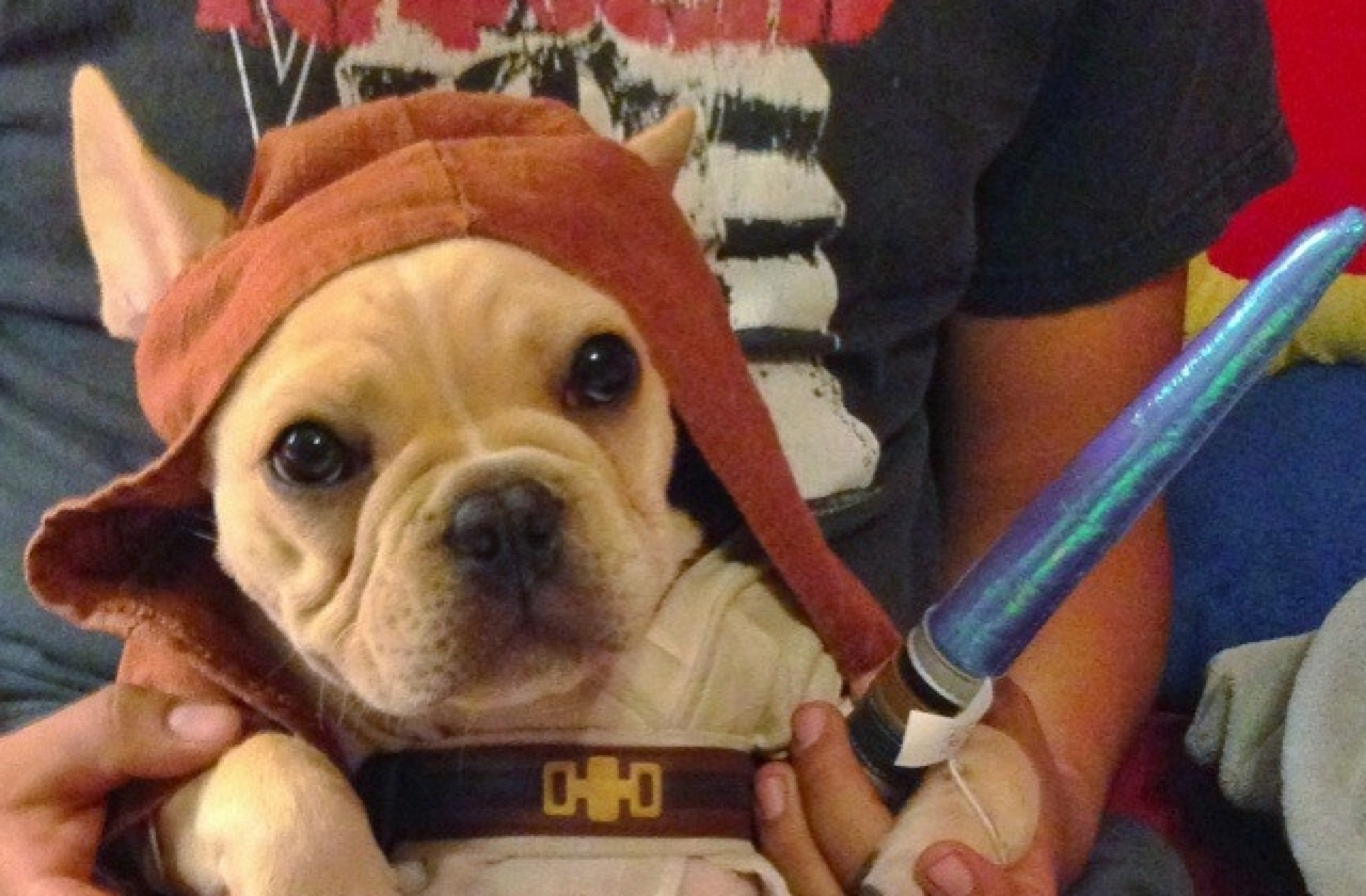 day dogs definitely feel the force healthy paws pet insurance