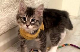 MEOW Cat Rescue