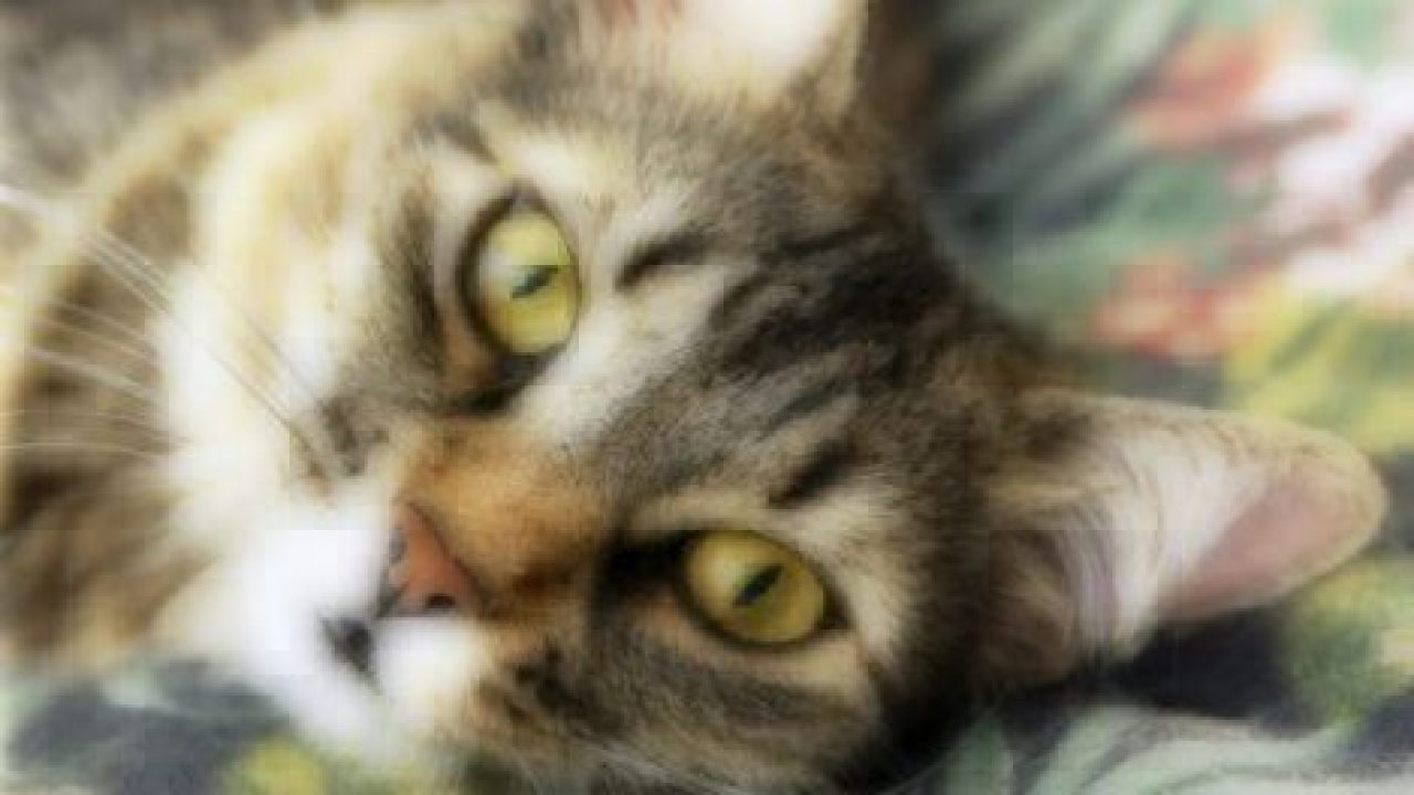 common cat eye problems