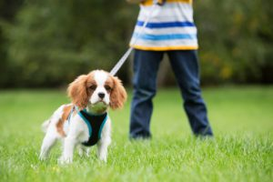 focus exercises for dogs