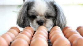 healthy paws can dogs eat eggs