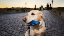GPS Collar for Dogs