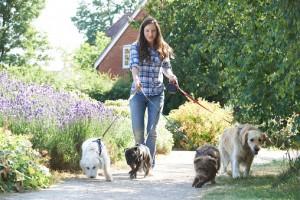 Walk Your Dog Week Leashes