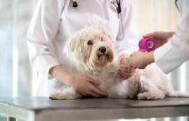 puppy insurance