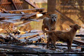 remembering-katrina-and-effected-pets