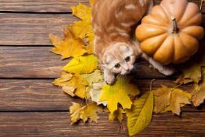 can dog cat eat pumpkin