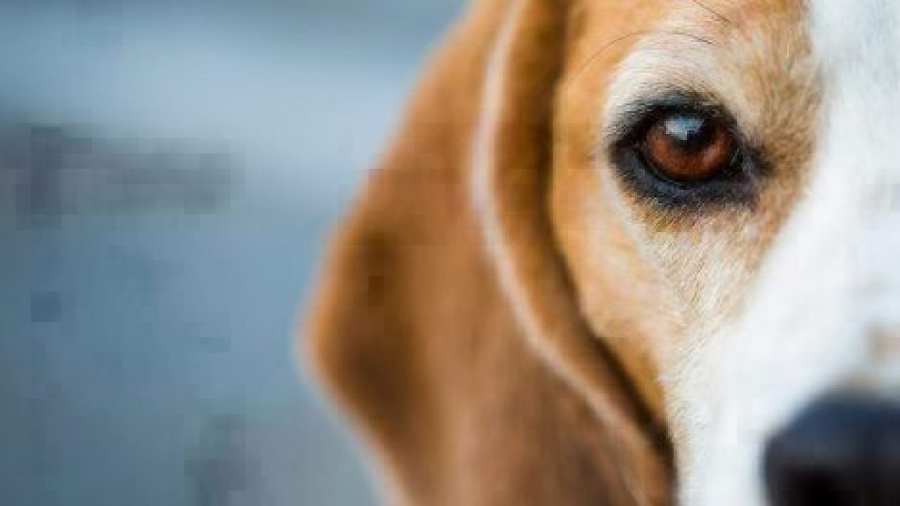 Can You Get Dry Eye In One Eye In Dogs