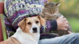 wellness exam for senior pets