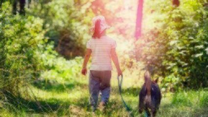 lyme disease prevention for pets
