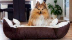 pet-insurance-puppy