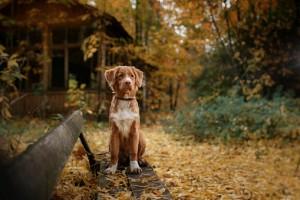 fall weekend getaway dog