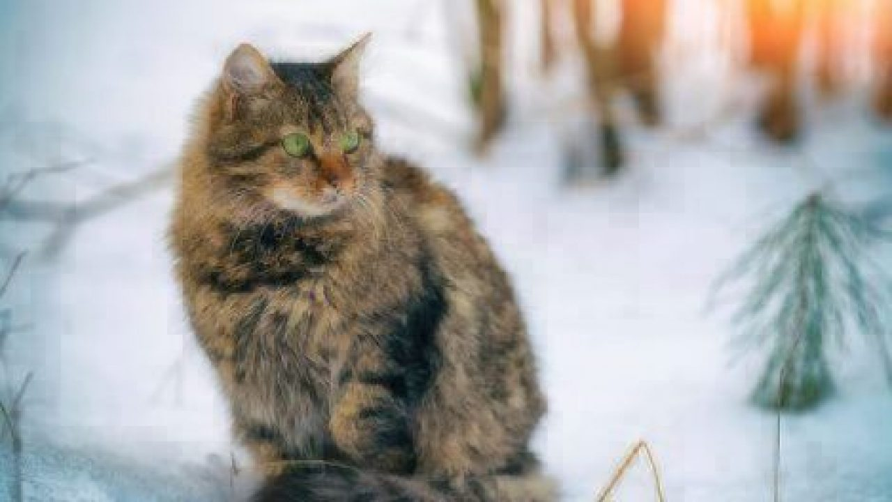 keep cats safe in the winter