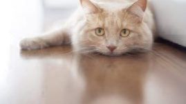 cat illnesses upset stomach problems