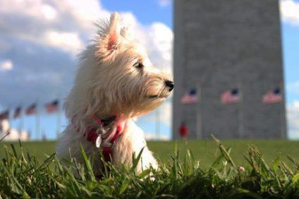 quiz presidential pets