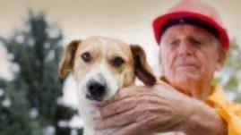 Hurrican Matthew Pet Preparedness