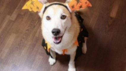 Best Halloween Costumes for Pets