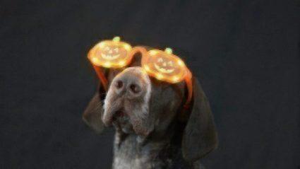 pumpkin pup