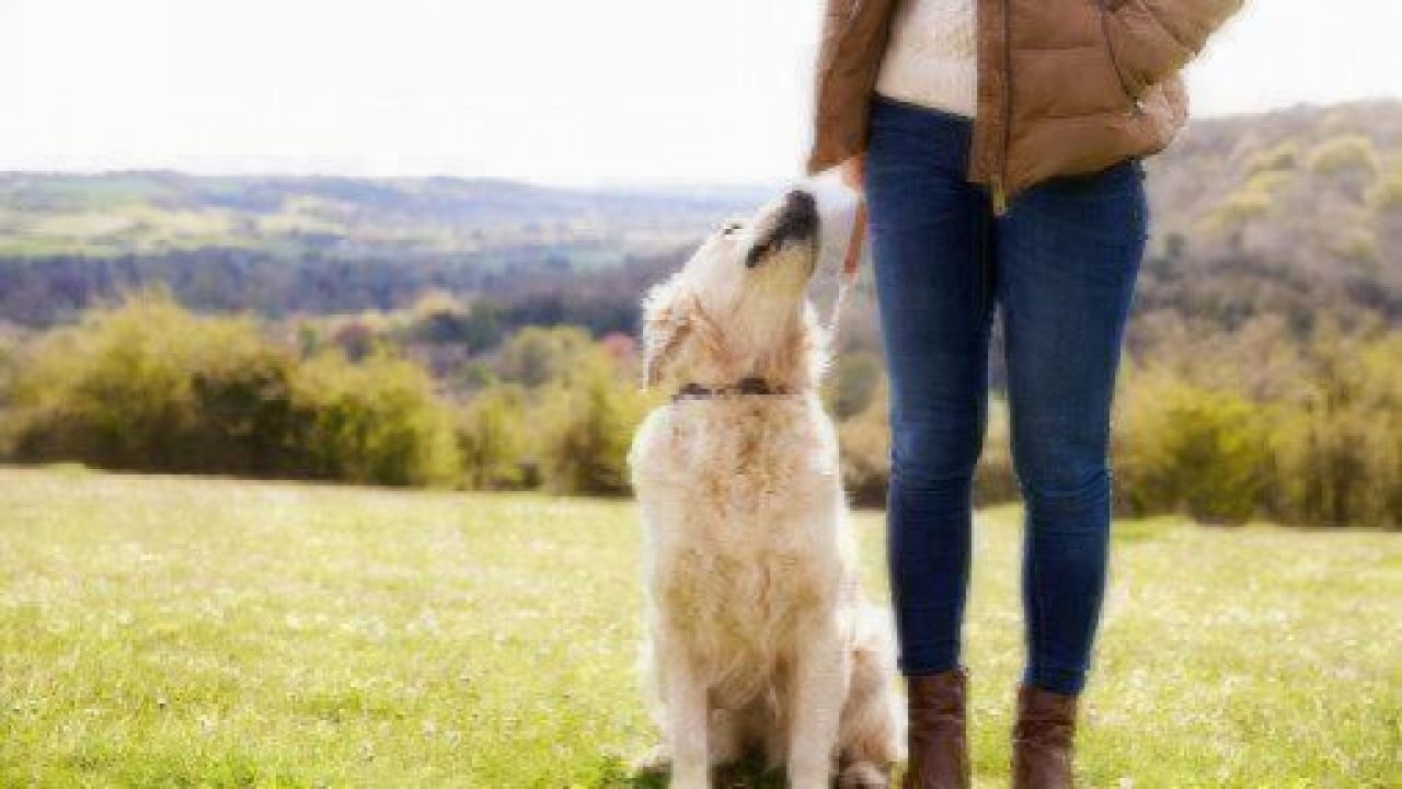 how to select a dog walker
