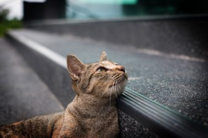 cats and cancer
