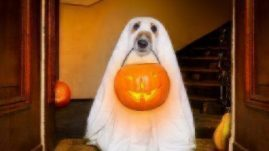 dog trick or treat costume