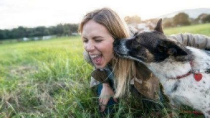 dog parents healthy paws