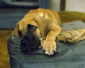 dog-upset-stomach-tips