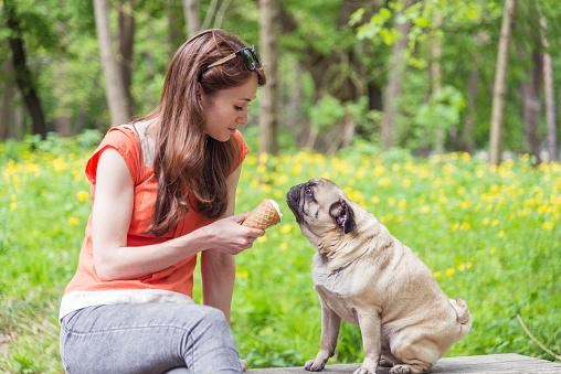 Can I Give My Dog Vanilla Ice Cream
