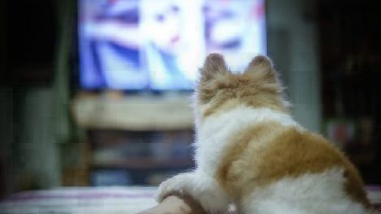 healthy paws dogs watching tv